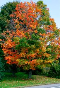 changing-tree